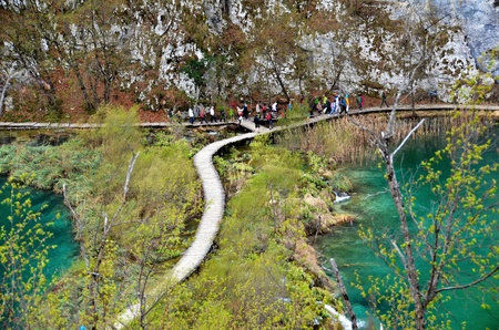 Bridges and wooden paths leading visitors between the rich colors and unique vegetation of the Plitvice Lake     photo