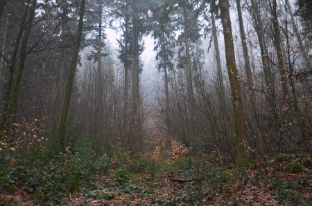 foiliage: Mood lighted image in the Black Forest, Germany