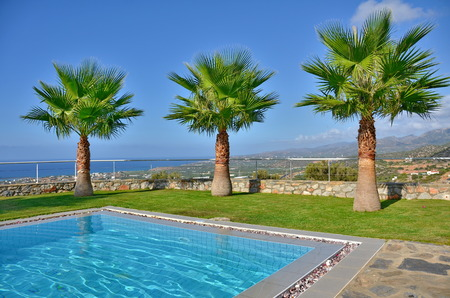 three palm trees: Three palms on a summer vacation - Palm trees by the pool with the Cretan mountains in the background in Malia, Crete near Heraklion