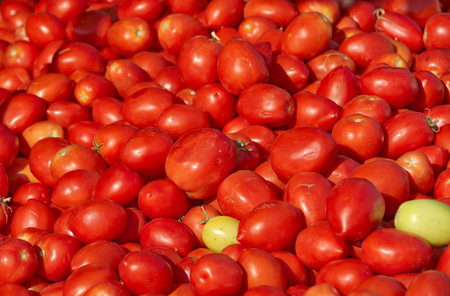 yam israel: Fresh produce - red juicy tomatoes in a Tel Aviv fruit and vegetable market Stock Photo
