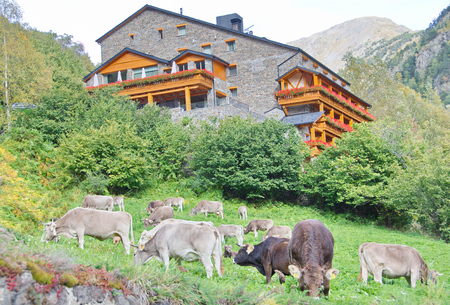 tourism in andorra: Typical dark brick Andorra house with  cows grazing on the grass in the tiny village of El Sarrat in the Pyrenees Mountains Editorial