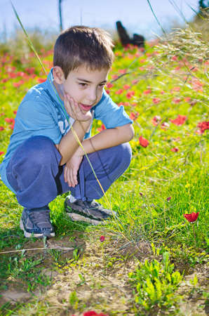 8 year old: 8 year old boy enjoying a field of wild red anemone coronaria (windflower)  flowers blooming in the Galilee, Israel, after the winter rains