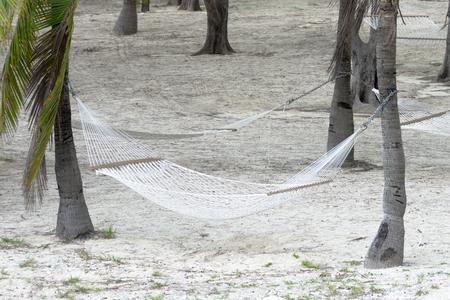 cay: Hammocks tied to palm trees in the tropical paradise island of Coco Cay in Bahamas, Caribbean