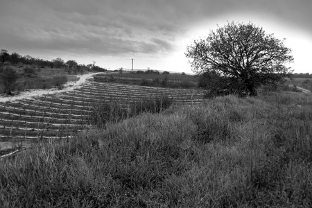holyland: Agricultural fields and  the beautiful green valleys, gently rolling hills, and mountains of the Carmel and Lower Galilee regions between Zihron Yaakov, Nazareth, and Safed in Israel - B&W