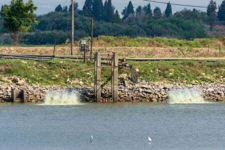 Fresh water fish growing ponds and migrating birds at Kibbutz Haogen in central Israel