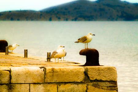 Seaguls in dreamy scene
