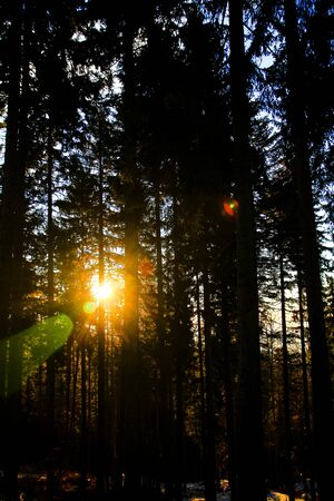 Sun rays trough the forest