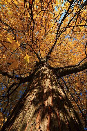 arbre: autumn scenes