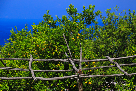 capri: Capri vegetation Stock Photo