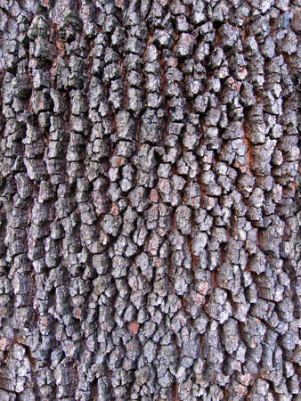 Tree bark  seamless texture Stock Photo - 10809728