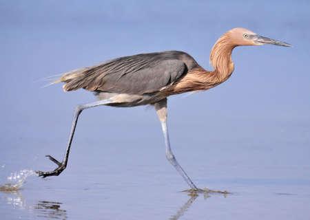 Run Egret Run