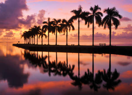 south miami: Beauty and the Beach