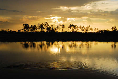 glades: Pine Glades Natural Area in Florida
