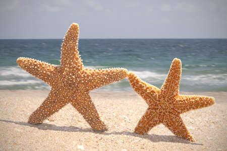 Two Starfish Dancing on the beach photo
