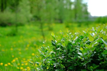 Forest shrubs summer warm weather.
