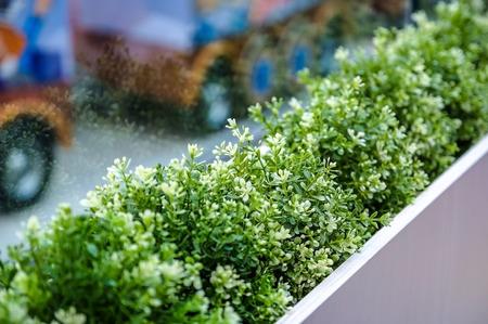 Fresh green grass grows in a concrete pot. Stock Photo