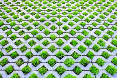Green grass grows from decorative paving slabs