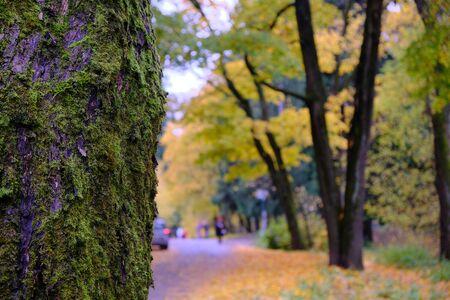 For wallpaper design. Abstract orange background. Autumn forest. Natural pattern Zdjęcie Seryjne