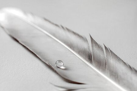A beautiful image with a colorful Dewdrop of a birds feather on a soft background. beautiful Wallpaper. The pattern of the Wallpaper. Bokeh. Colorful decorations. Artistic design Banco de Imagens