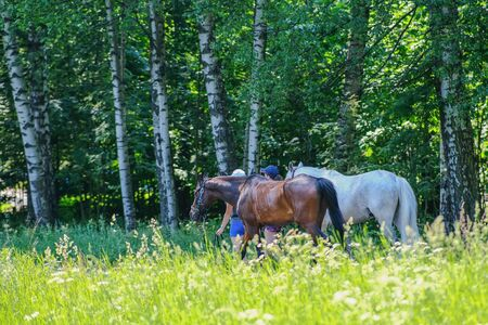 Two girls lead by the bridle two horses piebald and black. In the summer heat, horses are taken to bathe in the lake
