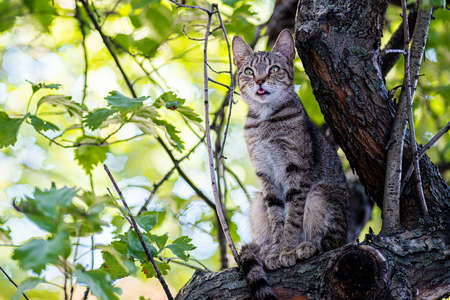 A wild cat on the tree close up background. Foto de archivo