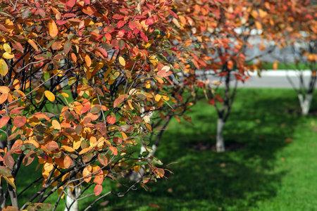 Autumn garden view of leaves. Autumn forest road landscape. Autumn leaves road view. Banque d'images