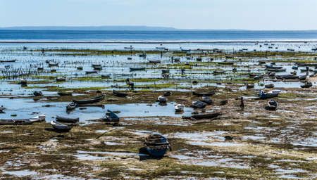 nusa: Seaweed farming at low tide on the Nusa Lembongan Island Stock Photo