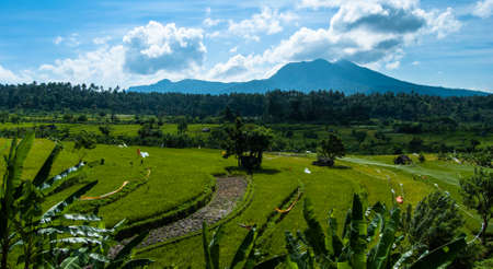 agri: Rice terraces on Bali with the view to volcano