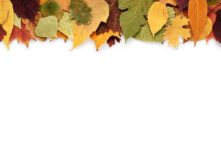 Autumn composition with leaves on a white background and empty space for text