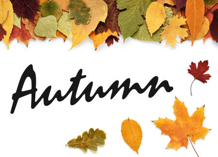 Autumn leaves and inscription Autumn on a white background or space for your text Zdjęcie Seryjne