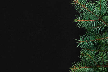 Christmas tree branches on the right side on a black board background. Copy space, flat lay, view form above