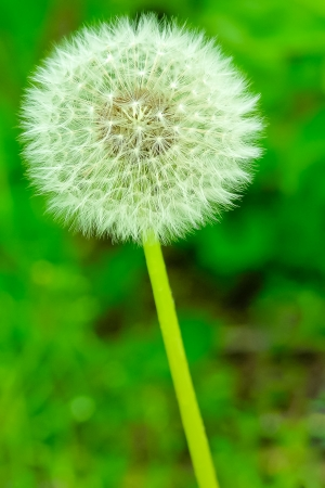 peculiar: peculiar round and symmetric flower in green meadow