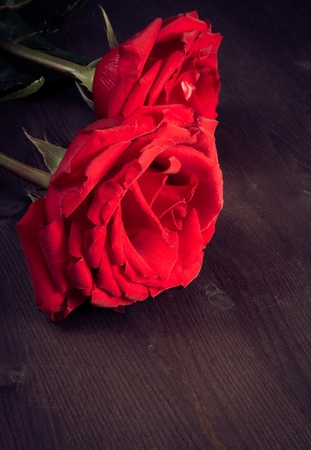 two red roses on old wood, old style, valentine day and love\ concept