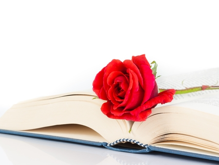 red rose on the book on white background with space for text photo