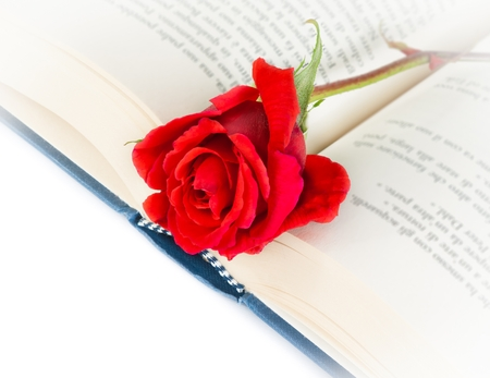 red rose on open book on white background photo