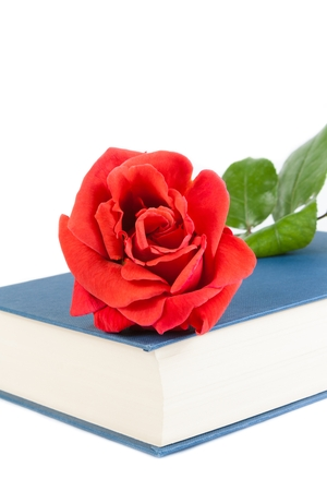 detail of red rose on closed book on white background photo
