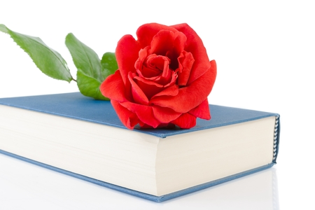 red rose on closed book on white background with space for text photo