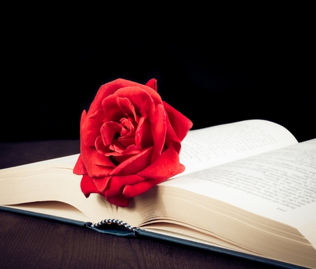 red rose on open book on old wood background with space for text photo