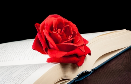 detail of red rose on open book on old wood background with space for text photo
