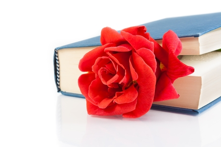 red rose inside of the closed book on white background with space for text photo