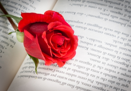 detail of red rose on the open book, love concept photo