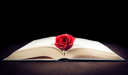 red rose on the open book on old wood and black background with space for text
