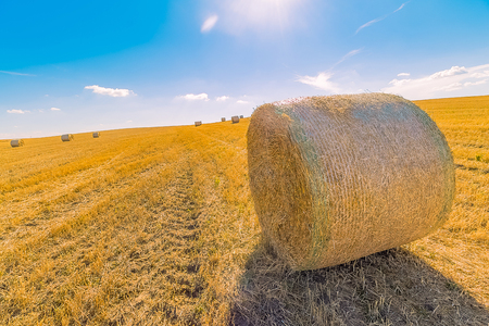 hay bales landscape of yellow grass fields under blue sky with white clouds, agriculture and nature and relax, climate change concept Standard-Bild - 107784364