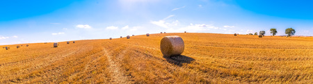 hay bales landscape of yellow grass fields under blue sky with white clouds, agriculture and nature and relax, climate change concept Standard-Bild - 107668864
