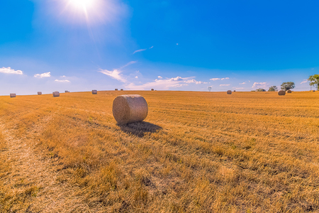 hay bales landscape of yellow grass fields under blue sky with white clouds, agriculture and nature and relax, climate change concept Standard-Bild - 107661966