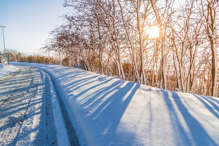 white snow with trees on mountain and street under blue sky with warm sunlight growing, concept of travel and holiday on snow background, nature sunset scene