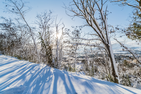 white snow with trees on mountain and hill under blue sky with sunlight growing, concept of travel and holiday on snow background