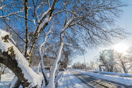 detail of  trees branch with white snow on street  with snow and hill, concept of travel and holiday on snow background
