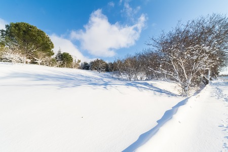 white snow with trees on mountain and hill, concept of travel and holiday on snow background