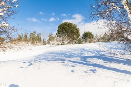 white snow with trees on mountain and hill under blue sky, concept of travel and holiday on snow background
